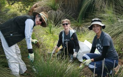 Cottesloe Coastcare Corporate Days